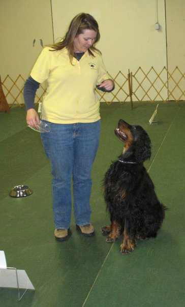Irish Setter, obedience, rally, dog sport