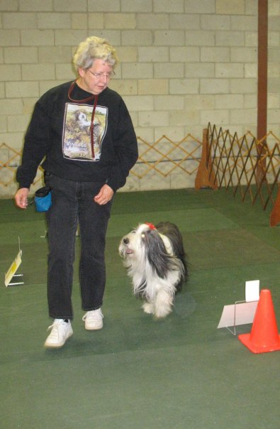 rally, obedience, akc, dog, training, columbia, sc, gcoc